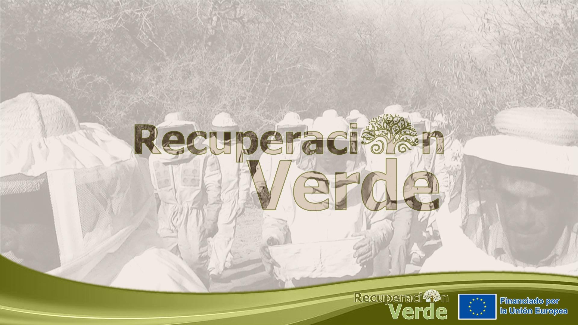 Recuperación Verde:  Cadena apícola en marcha.