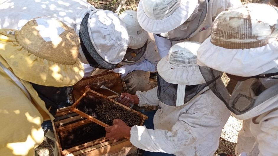 La Unión Europea impulsa la producción apícola de 50 familias indígenas y campesinas de Salta y Jujuy